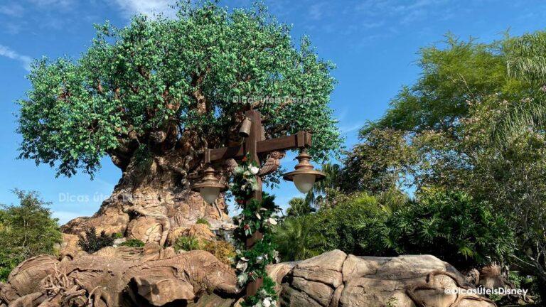 como-area-discovery-island-animal-kingdom-disney-arvore-da-vida-tree-of-life-destaque-dicas-uteis-disney