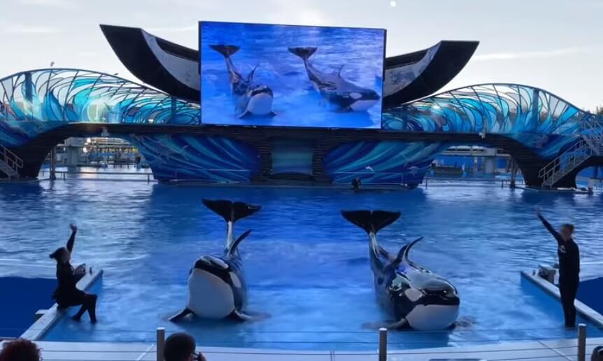 Como-e-area-ice-breaker-seaworld-show-orca-encounter-show-baleia-chegar-dicas-uteis-disney