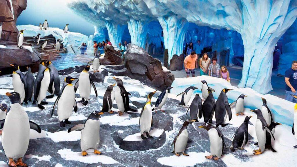 como-e-area-antarctica-empire-of-the-penguin-4-dicas-uteis-disney