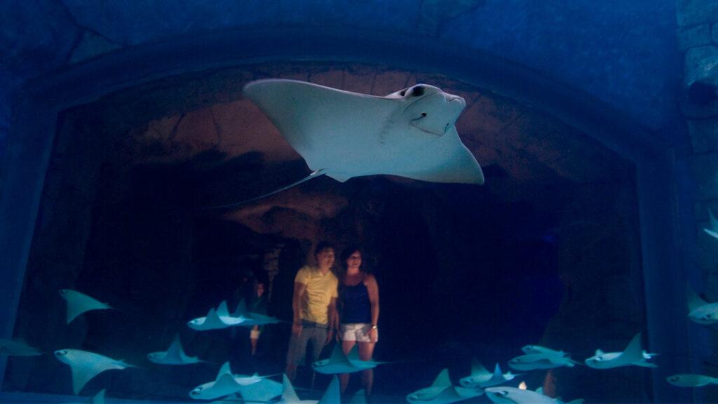 como-e-area-manta-seaworld-orlando-Manta-Aquarium-dicas-uteis-disney