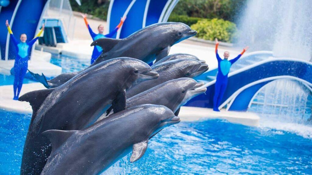 como-e-area-manta-seaworld-orlando-show-dolphins-days-dicas-uteis-disney