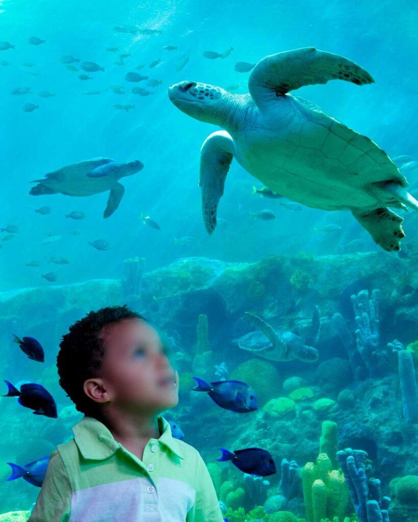 como-e-area-manta-seaworld-orlando-turtle-trek-dicas-uteis-disney